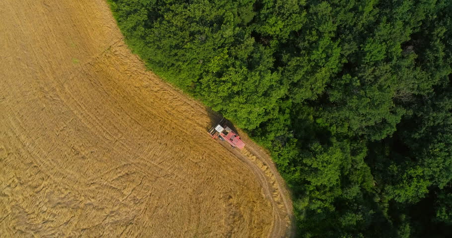 Thresher farming in golden wheat field. Aerial view of threshing machine working in Italy. 24