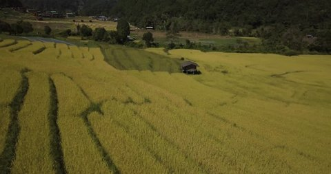 Aerial Arc Shot of a cottage in a Rice Field in Mae Chaem, Chiang Mai, Thailand. 4K Drone
