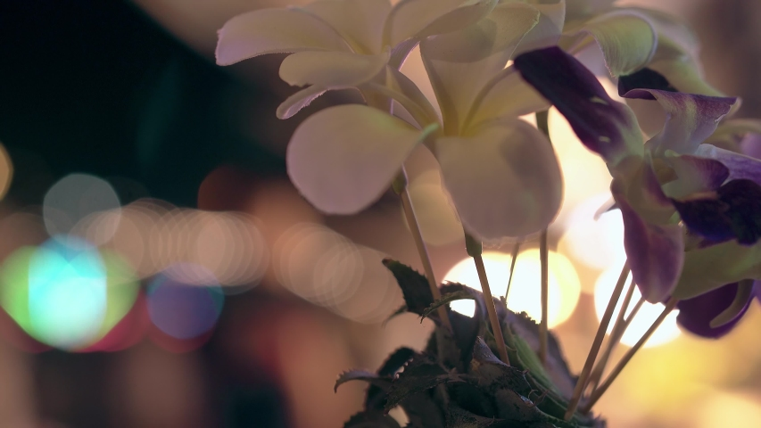 thin brown wooden sticks with blooming purple and white flowers in fresh pineapple against bright bokeh close view
