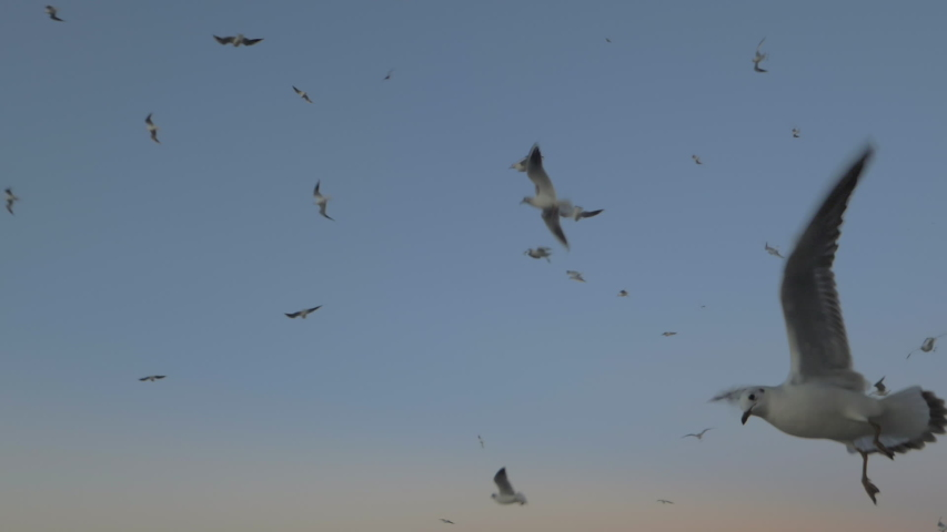 Slow motion shot of many seagulls hovering on the background of evening sky | Shutterstock HD Video #1029509810