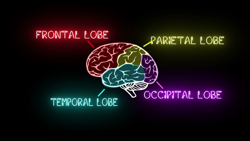 4K Brain Lobes Animation, Neon Sign | Shutterstock HD Video #1029738290