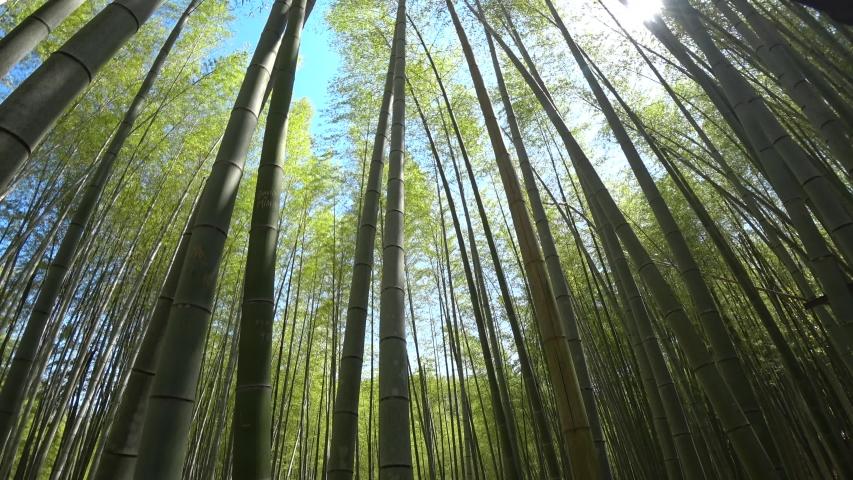 2019.5.23 Bamboo forest in Kyoto fushimi inaritaisya.It is very beautiful. | Shutterstock HD Video #1030746860