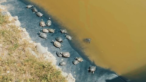 Turtle family sunbathing and resting