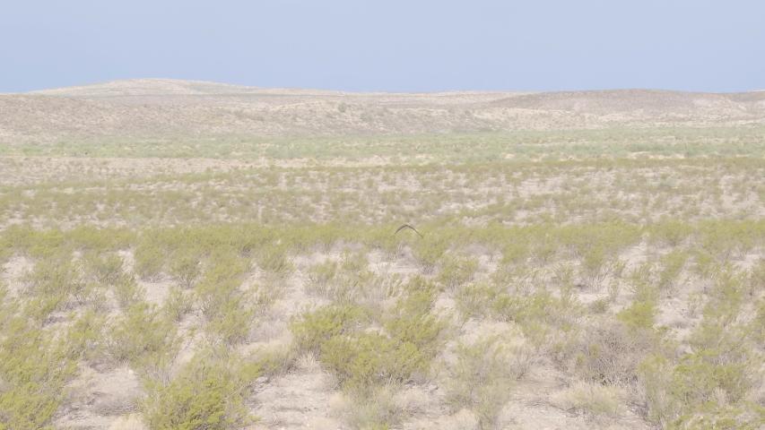 Red-tailed hawk flying across dry desert scene, Aerial tracking shot of majestic bird 4k