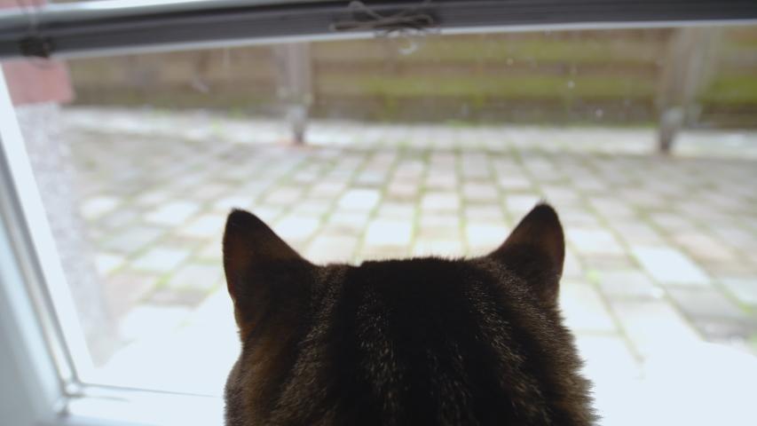 Cat ears looking through window 4K | Shutterstock HD Video #1031108600