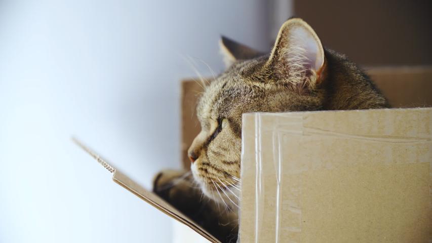 Cat enjoy the view from inside the box 4K | Shutterstock HD Video #1031108630