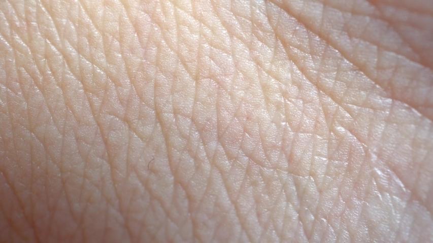 4k Macro Human Skin Background | Shutterstock HD Video #1031119520