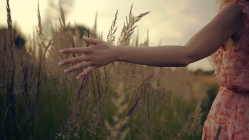Woman Walking On Summer Field.Woman Hands Close Up Touches Flowers.Hand Touches Grass In Green Field.Woman Enjoying Nature At Sunrise.Beautiful Woman On Meadow.Sun Through Hands.Girl Relax On Morning. | Shutterstock HD Video #1031889800