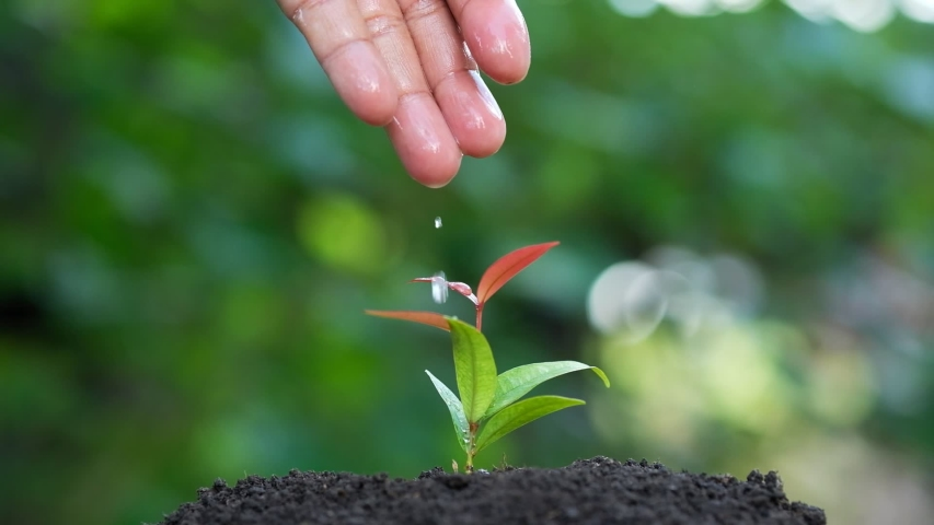 Slow motion male hand watering young plant. Beautiful bokeh background | Shutterstock HD Video #1032140000