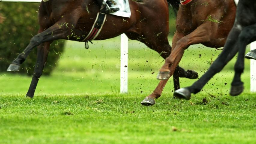 Super Slow Motion Shot of Running Horses at 1000fps. #1032432620