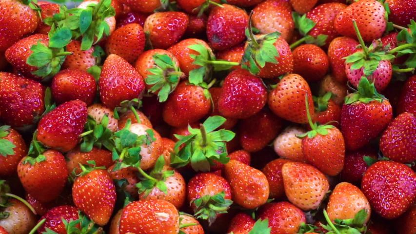 Fresh Organic Strawberry (Berries). Horizontal Closeup   Shutterstock HD Video #1033434860