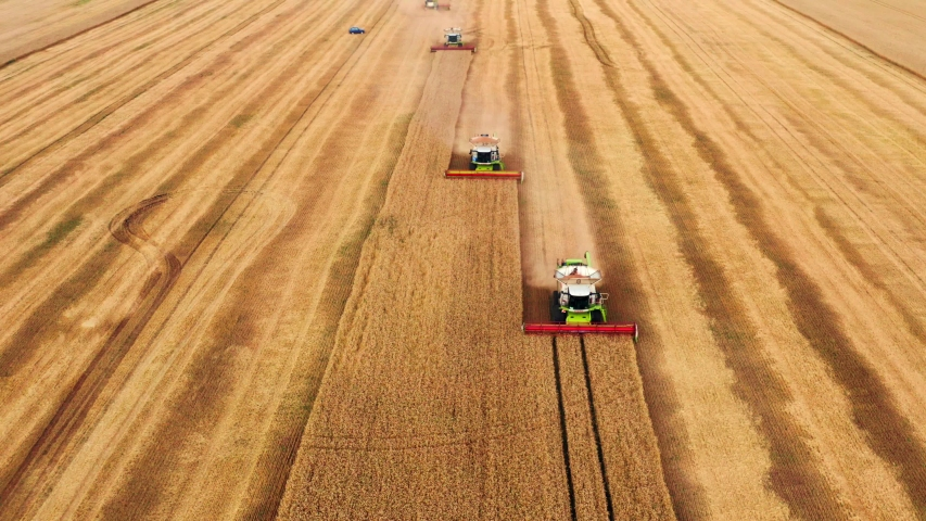 Summer harvesting of wheat in ripe field. Agriculture combine harvesters machines at work, aerial view.   Shutterstock HD Video #1033660460