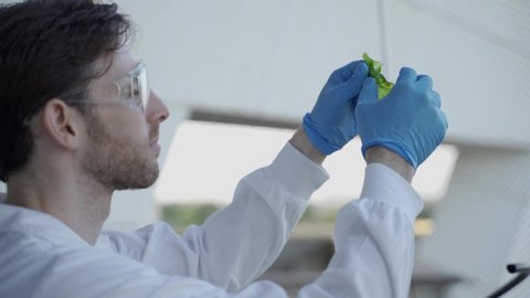Biotech scientist or student examining algae in a research laboratory