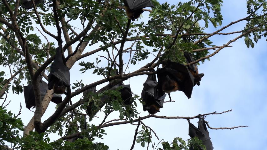 Midget hanging on tree — img 15