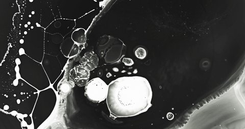 White and black liquid ink / paint drop stain on white paper background / paint bleed Bloom, with circle organic flow expansion, splatter spreading on pure backdrop texture \ petri dish