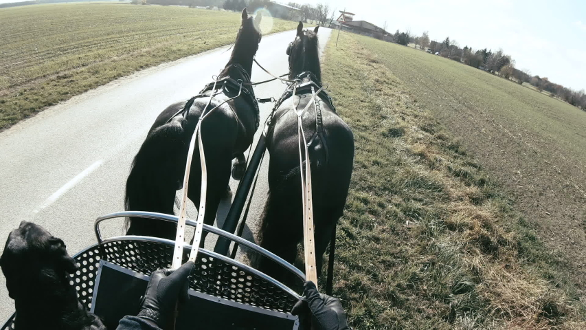 Coachman drive a coach steering the horses first person view. Person point of view holding reins and steering two black horses on the road on a bright sunny day. | Shutterstock HD Video #1035343160