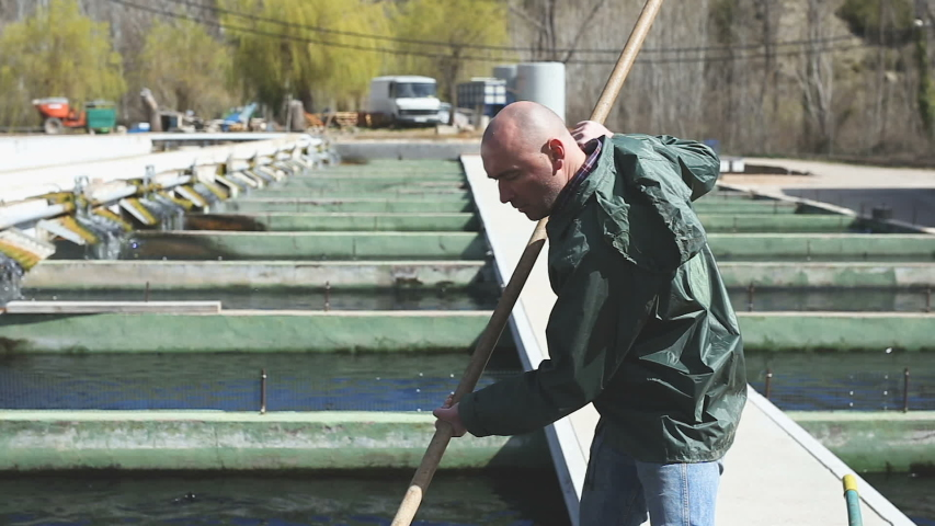 Portrait of man in working clothes catching sturgeon at fish farm  | Shutterstock HD Video #1036105280