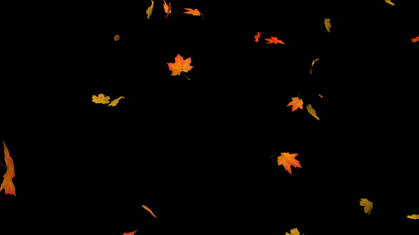 Falling autumn maple leaves realistic.3D rendering.Element footage on black background.Fall loop Animation .Easy to use and change color.This work have alpha. | Shutterstock HD Video #1036239110