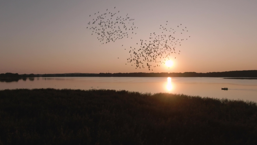Large flock of birds in flight over the lake at sunset. Common starling. Birds flying on setting sun background. Sturnus vulgaris.  | Shutterstock HD Video #1036350650