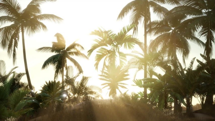 Silhouette coconut palm trees at sunset | Shutterstock HD Video #1036938860