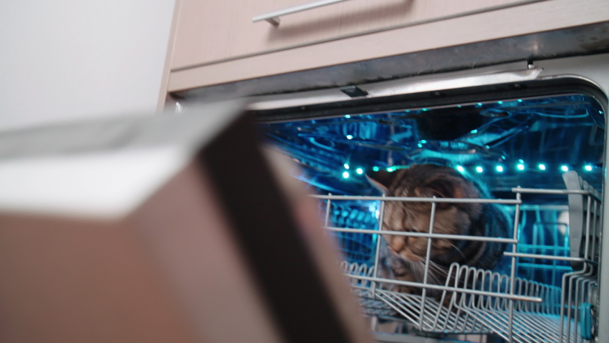 Person open the dishwasher with cat inside 4K. Person point of view opening the dishwasher with a cat in focus inside. | Shutterstock HD Video #1036954850