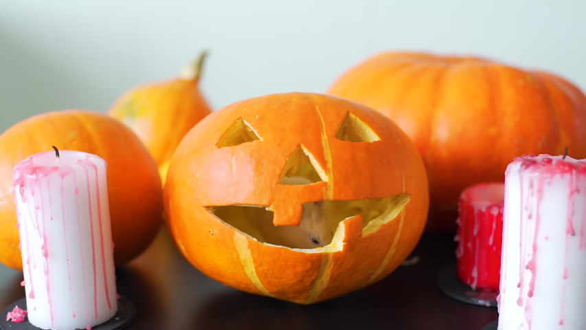 Cute Little Hamster Stick Out Its Nose From Pumpkin Jack-O-Lantern. Holidays and Halloween Decorations Concept   Shutterstock HD Video #1037123450
