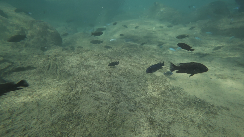 Snorkeling following colorful fishes in lake malawi | Shutterstock HD Video #1037171540