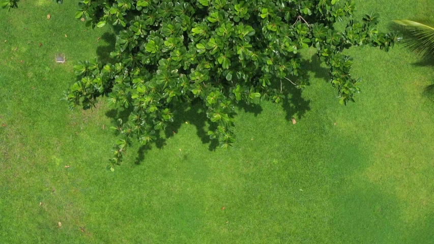 Top down view over park in Asia featuring beautiful lush green grass and trees. The trees waver in the wind | Shutterstock HD Video #1037399930