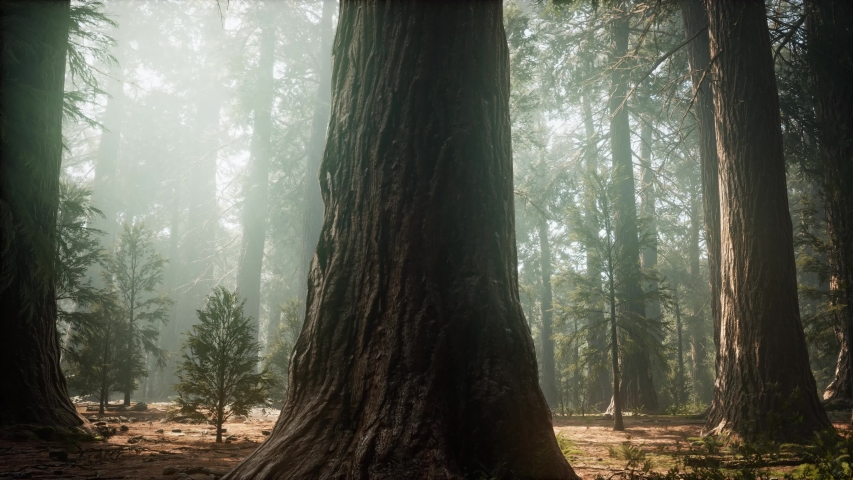Sunrise in the Sequoias, General Grant Grove, Sequoia National Park | Shutterstock HD Video #1037488790