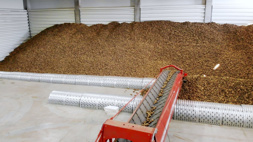 Potatoes move on special conveyor machinery belt and fit into a storage room, a warehouse for winter storage. potato harvesting, crop | Shutterstock HD Video #1038773900