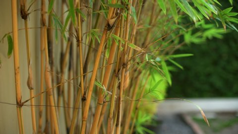 Purple Bamboo Park Stock Video Footage 4k And Hd Video Clips