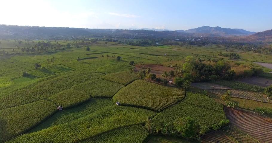 Drone fly over on green corn tree field in Sumbawa  | Shutterstock HD Video #1040698040