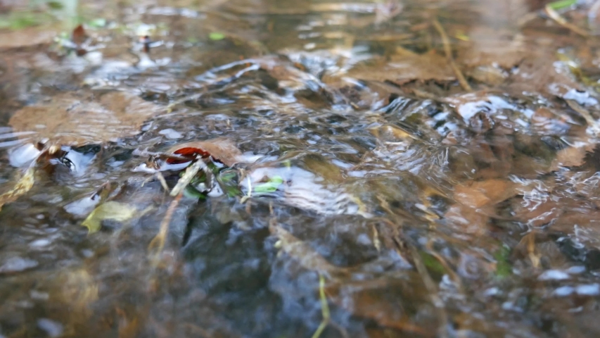 Small flowing stream in the middle of the forest.   Shutterstock HD Video #1041880540