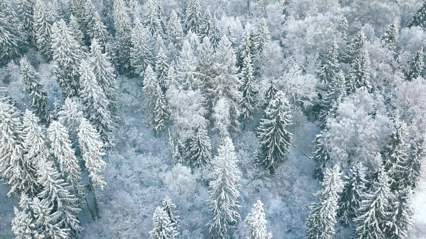 Aerial view of a frozen forest with snow covered trees at winter. Flight above winter forest in Finland, top view. | Shutterstock HD Video #1041999340