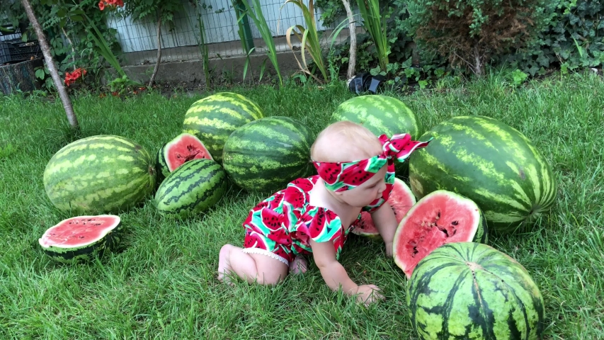 Interesting idea for a photo, a child in watermelons, bloggers, dad blogger takes a photo with children. | Shutterstock HD Video #1042650430