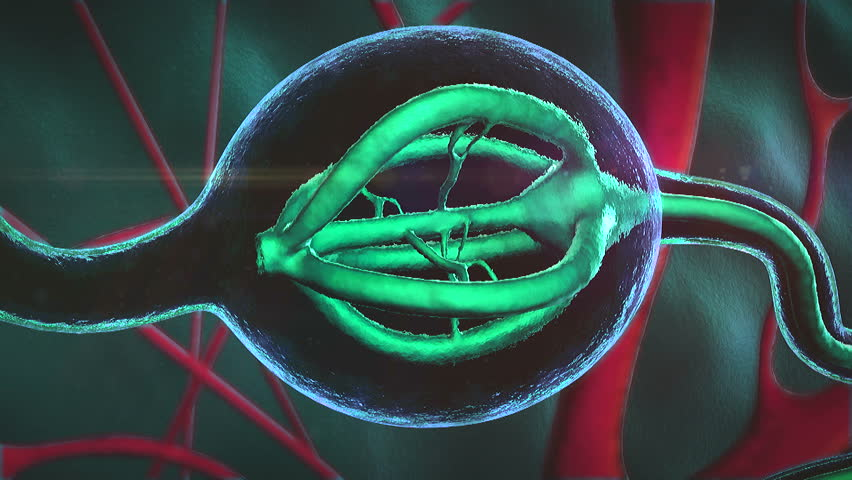 hormone produced by  gland, Neurons and neural system, Active nerve cell in human neural system, Neuron Impulses,  gland produce hormone