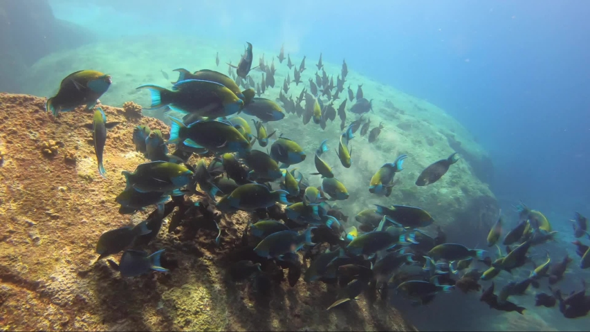 School of colourful parrot fish feed on coral rock reef together in beautiful sunshine | Shutterstock HD Video #1044770320
