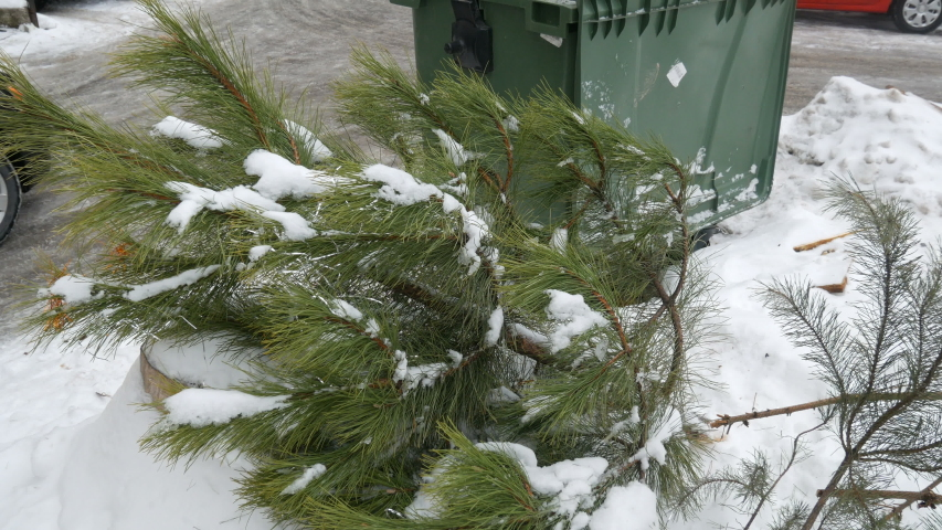 Christmas tree laying on the streen near trash can after new year holidays   Shutterstock HD Video #1044893530