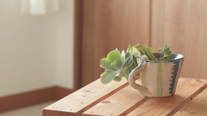 A small plant in a large coffee mug with wooden table and background | Shutterstock HD Video #1045451350