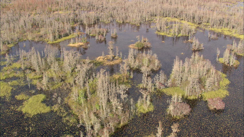 okefenokee swamp ap essay Plan your visit the refuge has so okefenokee swamp park (north) - a private non-profit facility what is there to do at okefenokee national wildlife refuge.