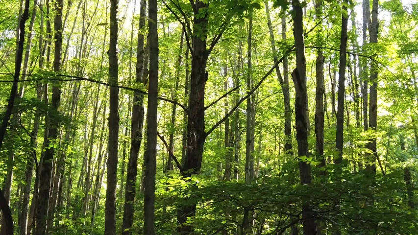 Forest video background for your video projects such as premiere, after effects or else. | Shutterstock HD Video #1046519320