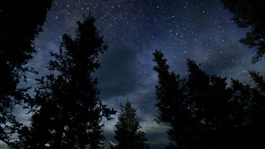 Forest Night Time Lapse