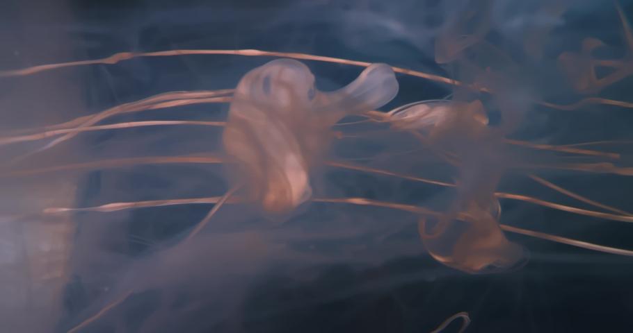 White  Fluid  in Motion underwater. Black Background. Macro.  Liquids Threads. | Shutterstock HD Video #1046968780