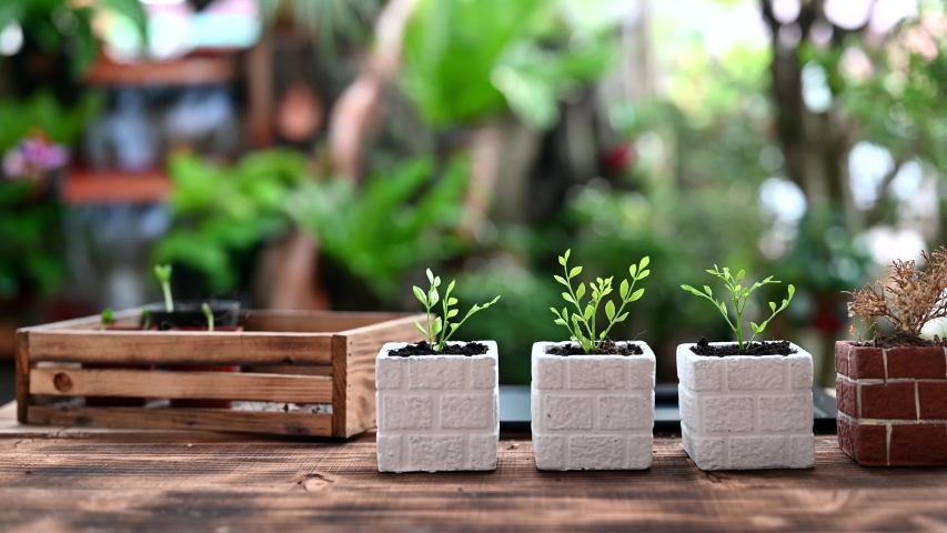 Experimenting with planting 4 trees and 1 dead. Home gardening nature and environment hobby. Relax and recreation on spring | Shutterstock HD Video #1047195580