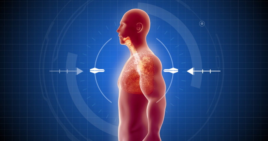 Human body X ray 3D rendering, Virus penetration, Computer diagnostics, tomography, HUD screen,Pneumonia, Lungs, Infection, Cold, Flu, Coronavirus Covid-19 | Shutterstock HD Video #1049596330