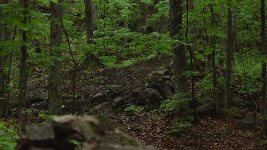 Pov Walk Through Rainforest Path Glide Shot Exotic Plants Around