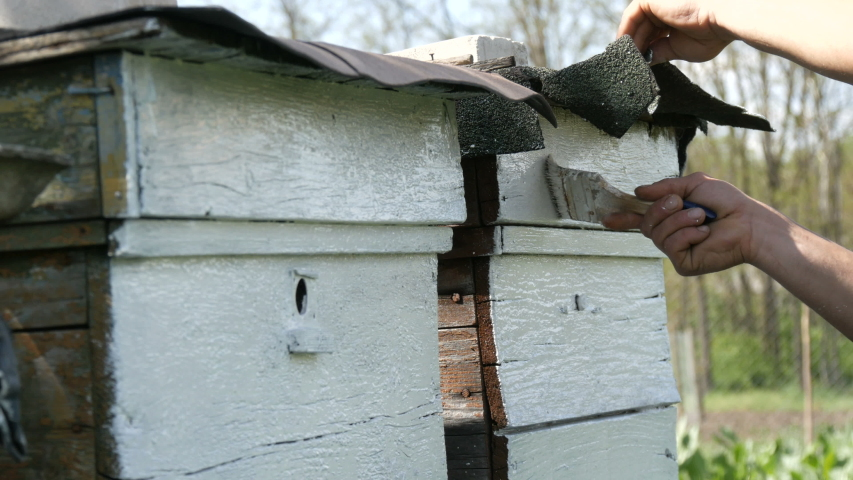 Spring preparation of a bee hive for the summer. Male beekeeper using special white paint and brush to paint wooden boards. | Shutterstock HD Video #1049865130