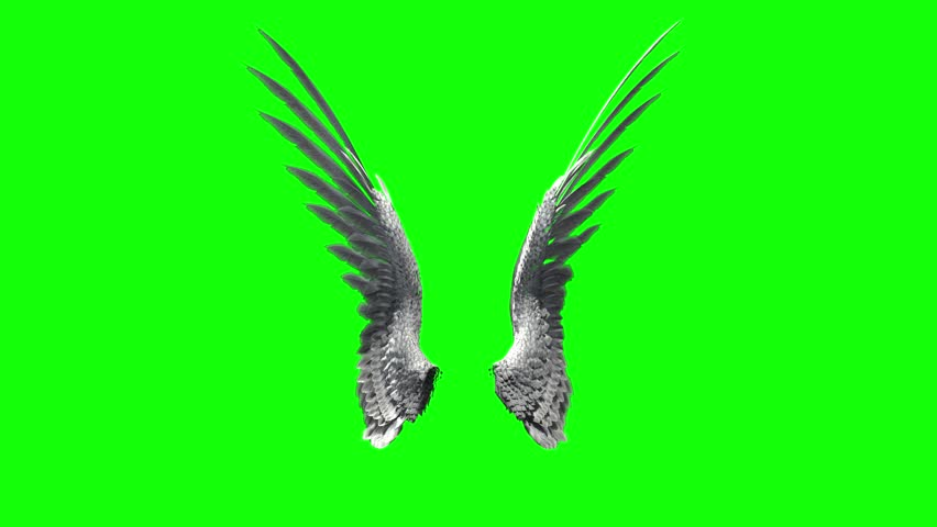 Pair of bird / angel wings flapping on a green screen for chroma key mate. #10569290