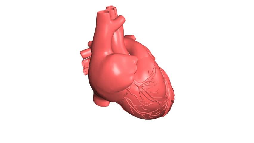 Stock video of 3d render of heart anatomy | 28835809 | Shutterstock
