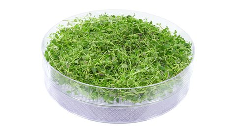 Time-lapse of drying (dehydrating) thyme (Thymus vulgaris) herb 1x3 in UHD 4K format